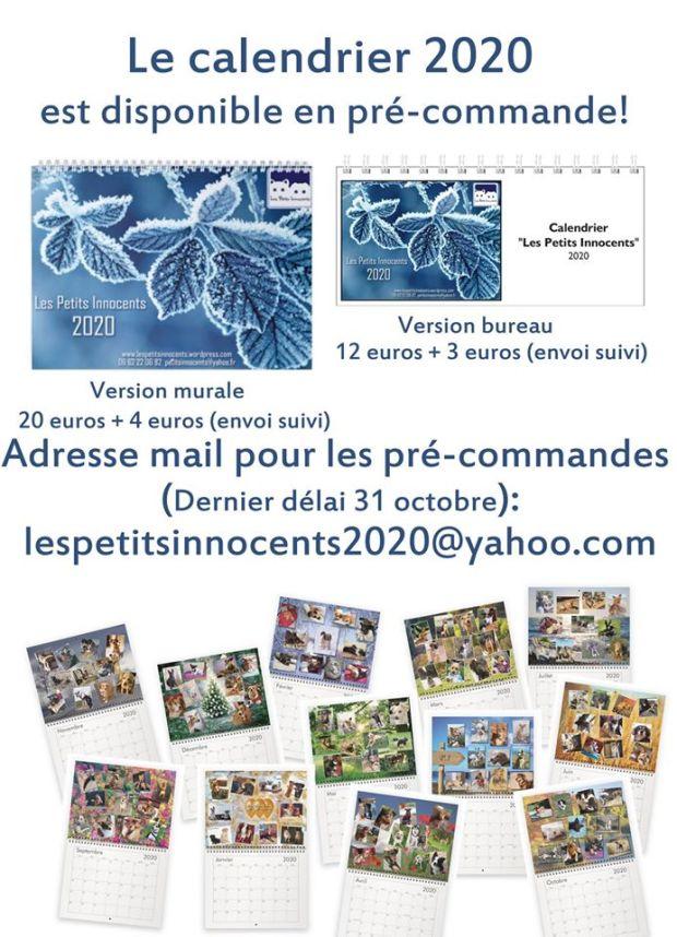 Vaccin Chiot Calendrier.Association Les Petits Innocents L Association Les Petits
